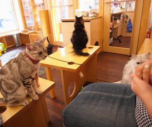 全民吸猫时代带来了哪些新生意?