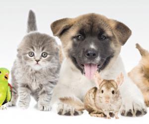 沙利文浅谈亚洲的宠物经济