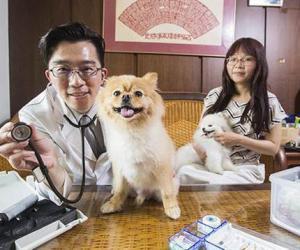 他设计宠物医疗APP 吸引硅谷投资人掏钱入股