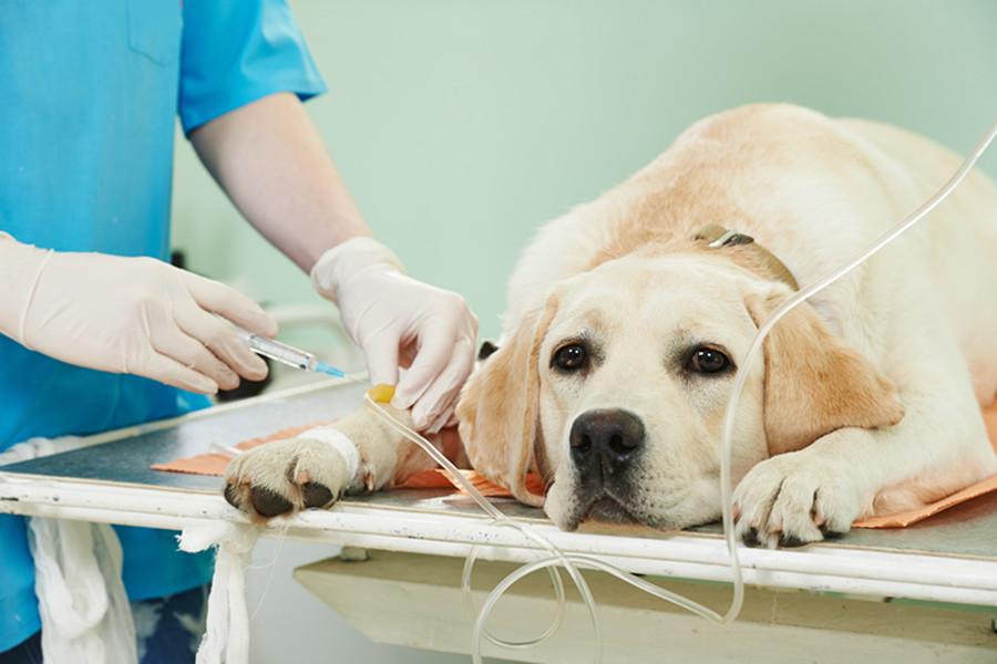 宠物市场,医疗,宠物医疗